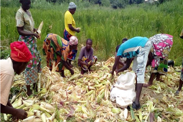 Support to agricultural recovery and improvement of food security in the Central African Republic